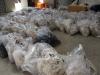 shearing-30