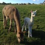 Katness with her Mum Leniun