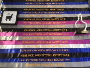 Berwick show ribbons