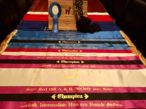 Ribbons and Trophies